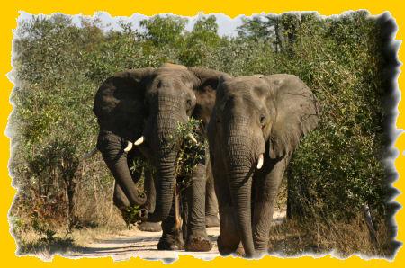 3olifanten.jpg