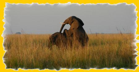 parende-olifanten.jpg