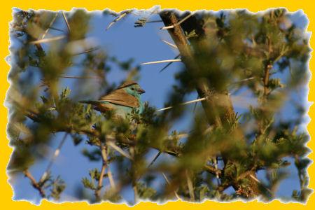 vogel-1.jpg