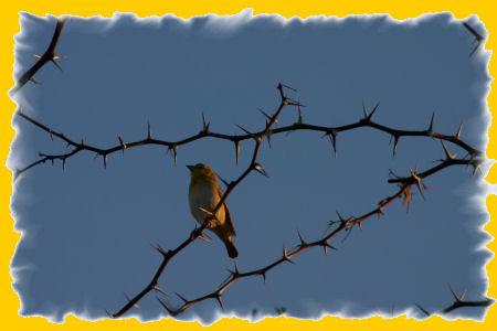 vogel-2.jpg