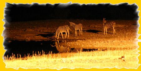 waterhole-zebras.jpg