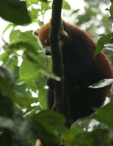 panda-4.jpg