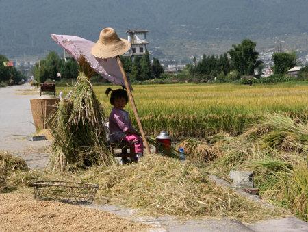 meisje-rijstveld.jpg