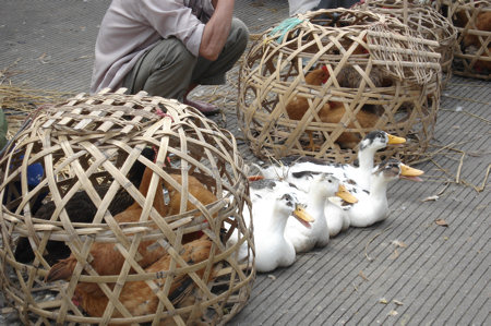 markt-yangshuo-2.jpg