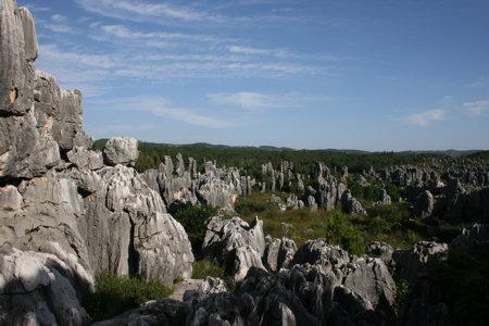 stenen-woud-2.jpg